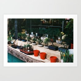 Bonsai Market Art Print