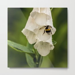 Bumblebee in the campanula Metal Print