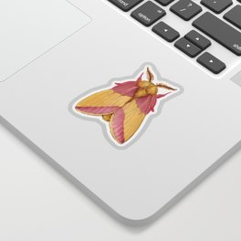 Rosy Maple Moth Sticker