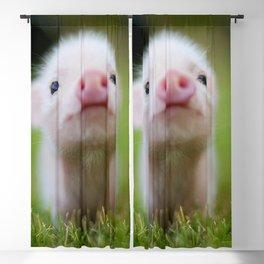 Little Pig Blackout Curtain