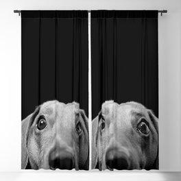 Bad Boy Blackout Curtain