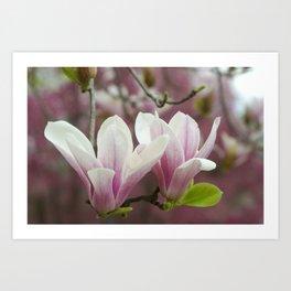 Pastel blossoms (Japanese magnolia) Art Print