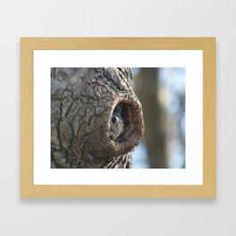 Peek A Boo Squirrel 2014 Framed Art Print