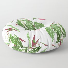 Simple Potted Polka Dot Begonia Plants in White Floor Pillow