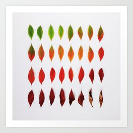 32 leaves from a Buckeye Tree Art Print