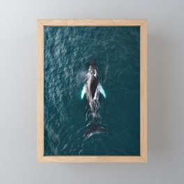 Humpback Whale in Iceland - Wildlife Photography Framed Mini Art Print
