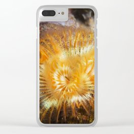Orange Serpulid Worm Clear iPhone Case