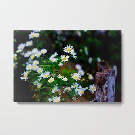 Daisy flower, Daisy hill,Asteraceae flower,  daisy hill, Photography, beautiful view, View Poster,  Metal Print