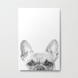 Bruno The French Bulldog Metal Print