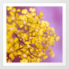 Yellow Orchid Flowers Art Print