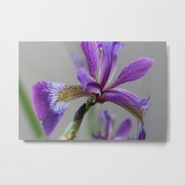 water iris Metal Print