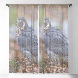 Peregrine Falcon Sheer Curtain