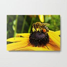 MM – BEE ON RUDBECKIA Metal Print