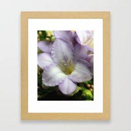 Freesia flowers Framed Art Print