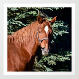 Miss Sadie - A horse, of course Art Print