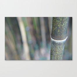 Bamboozal Canvas Print