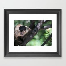 Ferocious Monkey Framed Art Print