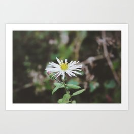 Love Is A Flower That Grows In Any Soil. Art Print
