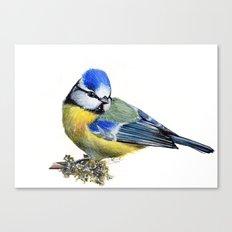 Bluetit Canvas Print