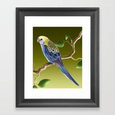 Pale-Headed Rosella Framed Art Print