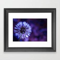 Violet Dandelion Framed Art Print