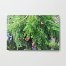 Norway Spruce IV Metal Print