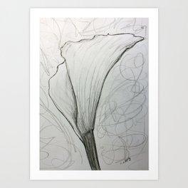 White Calla Lily Drawing Art Print