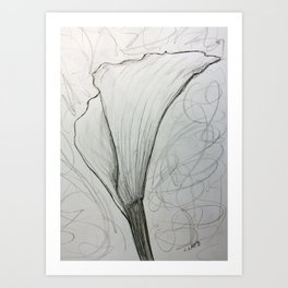 White Calla Lily Drawing Art Print