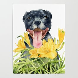 Joy | Pit Bull Dog and Daylily Watercolor Painting Poster