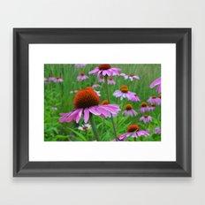 Pink Coneflowers Framed Art Print