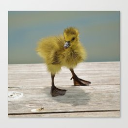 Duck Duck Goose Canvas Print