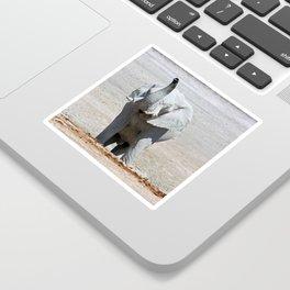NAMIBIA ... Elephant fun III Sticker