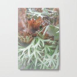 Ethereal Elkhorn Metal Print