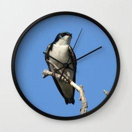 Male Tree Swallow Wall Clock