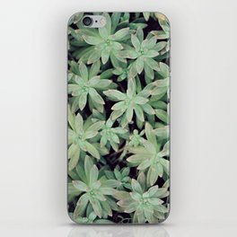 Succulent Abstract iPhone Skin