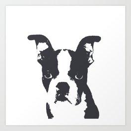 Boston Terrier Pop Art Art Print