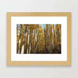 CO Aspens Framed Art Print