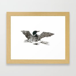 Morning Stretch - Common Loon Framed Art Print