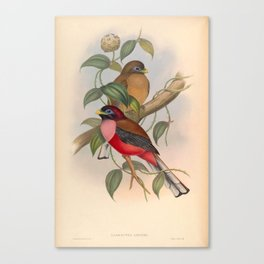Vintage Birds Of Asia Harpactes Ardens Canvas Print