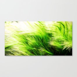 Green Swaying Grass in Summer Breeze Canvas Print