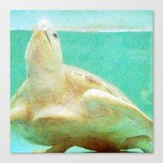 Portrait of a Sea Turtle Canvas Print