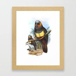 Masséna Kaka Parrot, tropical bird in the nature of New Zealand Framed Art Print