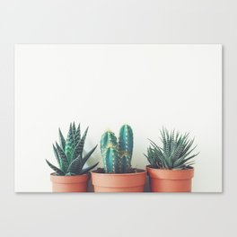 Potted Plants Canvas Print
