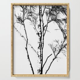Silver Birch In Winter Serving Tray