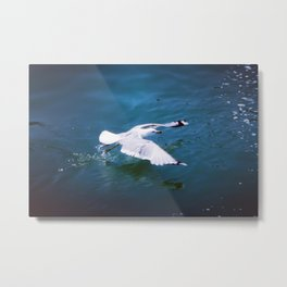 Taking off the Sea Metal Print
