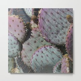 Cactus Whiskers Metal Print