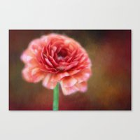 persian Canvas Prints featuring Persian Buttercup by ThePhotoGuyDarren