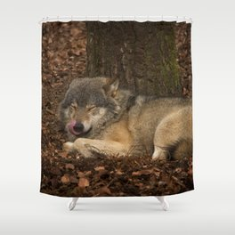 Sleepy Grey Wolf Shower Curtain