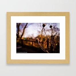 Spring Blurs Framed Art Print