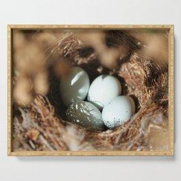 Bird Eggs Nest Serving Tray